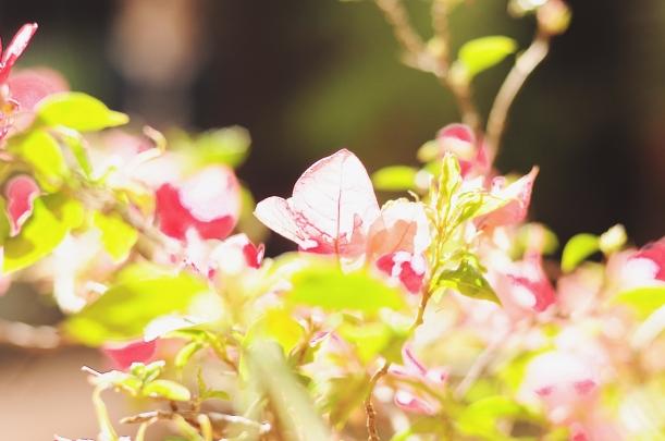 Camila Nardi - Saia Guipir Floral