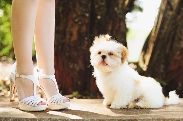 Camila Nardi - Fotos com Cachorros (24)