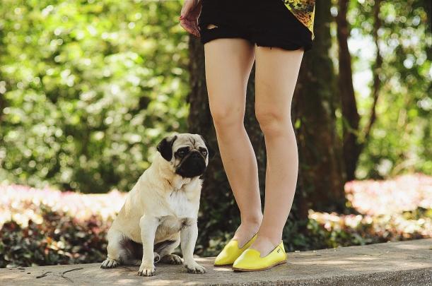 Camila Nardi - Fotos com Cachorros (28)
