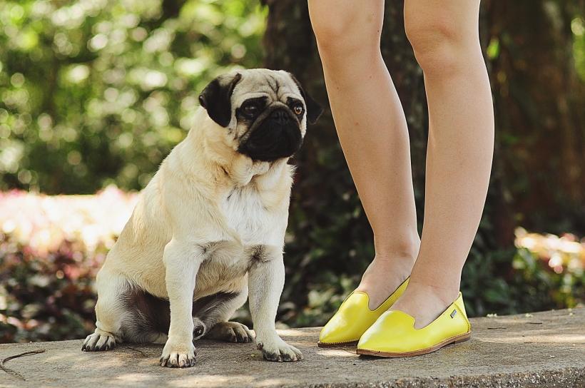 Camila Nardi - Fotos com Cachorros (29)