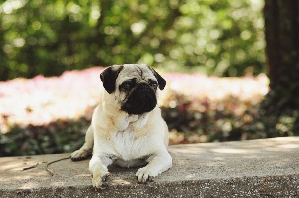 Camila Nardi - Fotos com Cachorros (30)