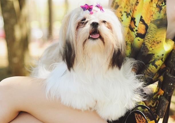 Camila Nardi - Fotos com Cachorros (34)
