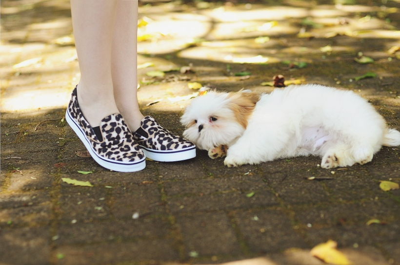 Camila Nardi - Fotos com Cachorros (40)