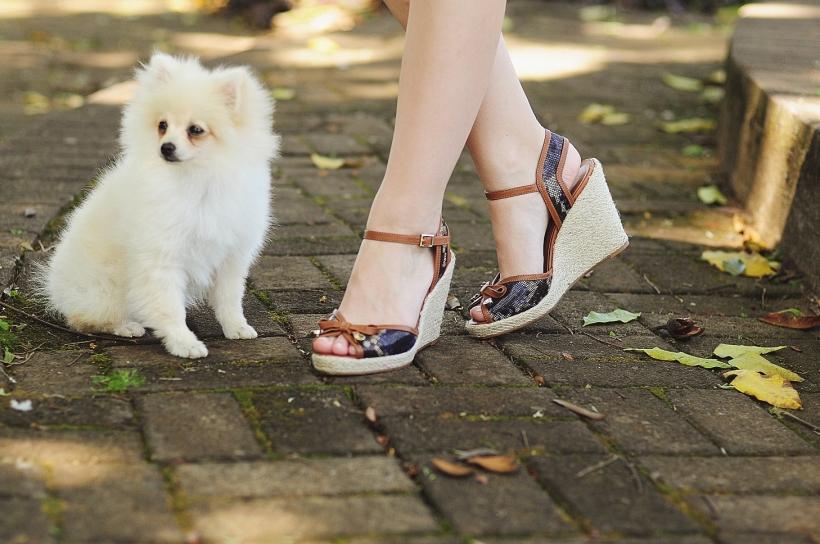 Camila Nardi - Fotos com Cachorros (44)